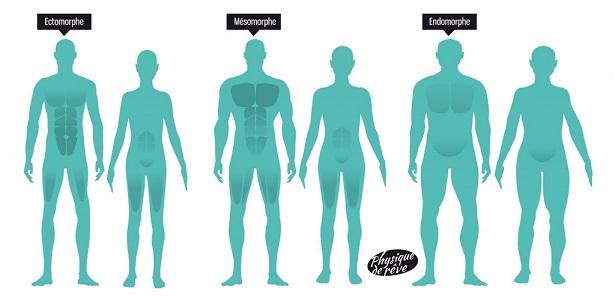 3 types morphologique :Ectomorphe, endomorphe, mésomorphe