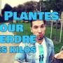 plantes qui font mincir