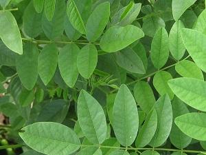 La r glisse pour mincir est ce un mythe ventre plat for Plante pour mincir